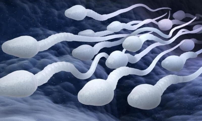 Les spermatozoïdes, garants de la fertilité masculine   Mamy Muna